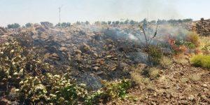 Terroraktion: verbrannte Plantagen, Photo: SANA